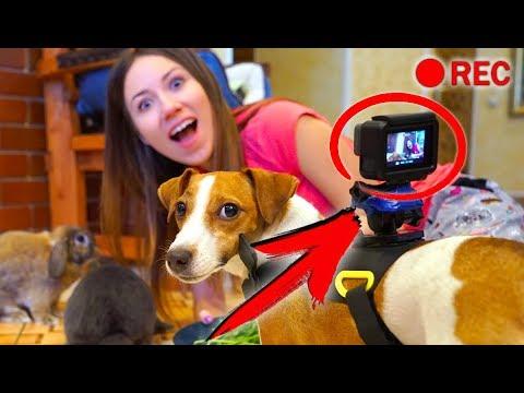 ПРИСОБАЧИЛИ Камеру НА ДЖИНУ ЧТО БУДЕТ ? СКРЫТАЯ КАМЕРА   Дом Призрак Elli Di Pets