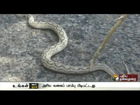 Rare-snake-found-in-Vedaranyam-given-to-forest-department