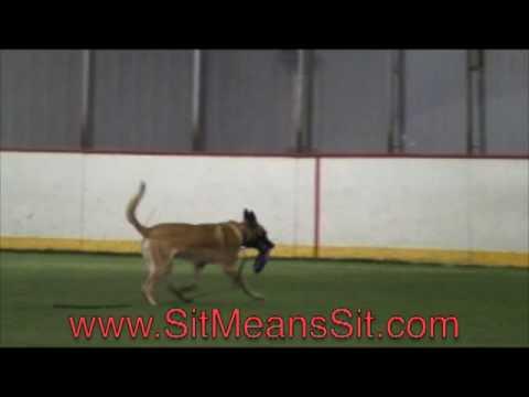 POLICE DOG  – Amazing training transformation