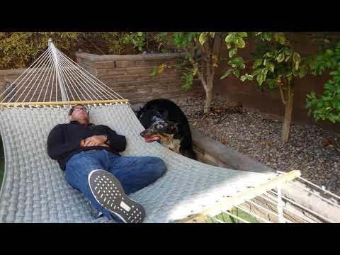 Beauceron Reunion October 2017