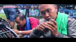 Download Video DUNIA HOBI : Cara Mudah Bikin Burung Ciblek Gacor Ngebren Di Atas Gantangan MP3 3GP MP4