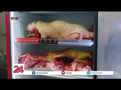 Mèo hóa chồn, hóa cầy hương, mất ATVSTP tại chùa Hương @ vcloz.com