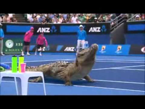 Funny Two Alligator Playing Tennis