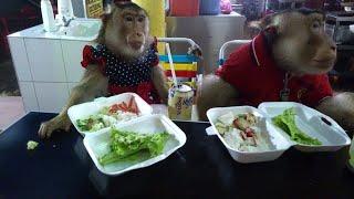 animale maimutele la un fast-food