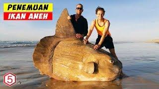Video Makhluk Paling Aneh Yang Pernah di Temukan Terdampar Di Tepi Pantai MP3, 3GP, MP4, WEBM, AVI, FLV April 2019