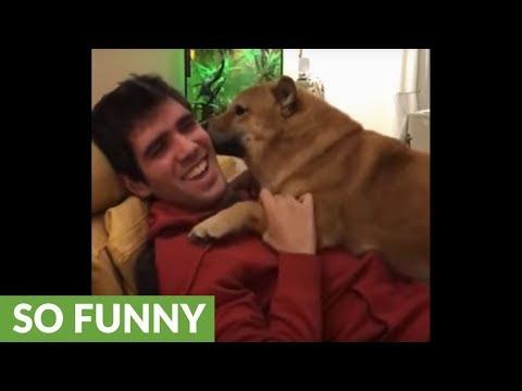 il-cane-che-non-smette-di-baciare-il-suo-umano