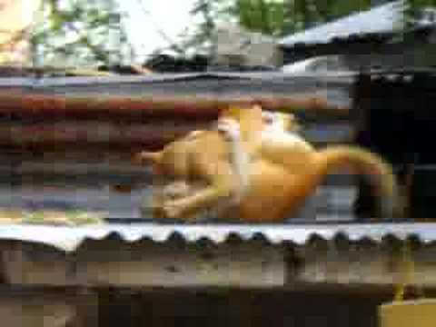 Insane Cats Fight On a Roof