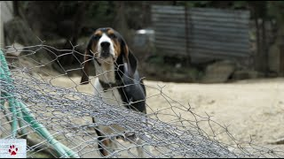 Life of dogs in rural Greece | a minority report by The Orphan Pet