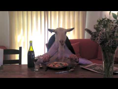 Goat Eating Dinner (Original Video)