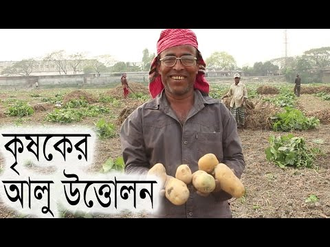 Download Bangladeshi farmer lifting potato from the field in Munshiganj | bangla news today HD Mp4 3GP Video and MP3