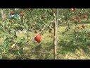 はこだてフードフェスタ生産現場取材記録 みやご果樹園01