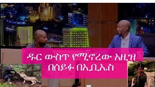 Seifu on EBS - Do People Live In the Forests? Watch this Interview with Azize to Find Out!