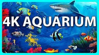 Video Le meilleur aquarium 4K avec de la musique de méditation – 2 heures – Économiseur d'écran 4K UHD MP3, 3GP, MP4, WEBM, AVI, FLV Desember 2017