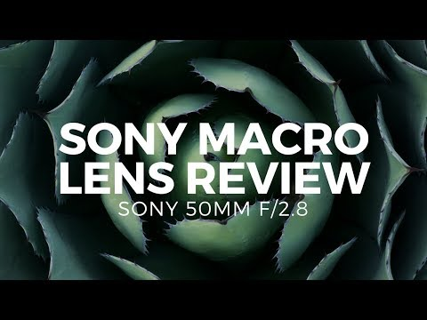Sony 50mm f/2.8 Review - The Best Sony Macro Lens On a Budget