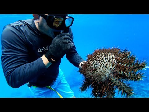 Spearfishing On TINY Ultra REMOTE Island!!! {Catch Clean Cook} Rota, CNMI