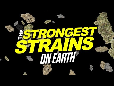 The Strongest Strains on Earth 2015