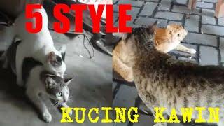 Download Video 5 STYLE KUCING KAWIN MP3 3GP MP4