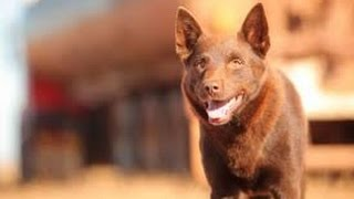 Nonton Red Dog  2011  Movie Review Film Subtitle Indonesia Streaming Movie Download