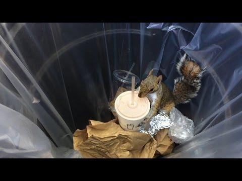 New York: lo scoiattolo beve milkshake