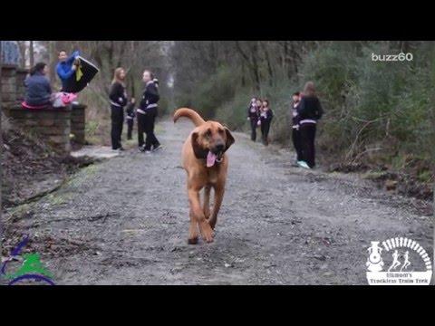 Dog's Bathroom Break Turns Into Half Marathon!