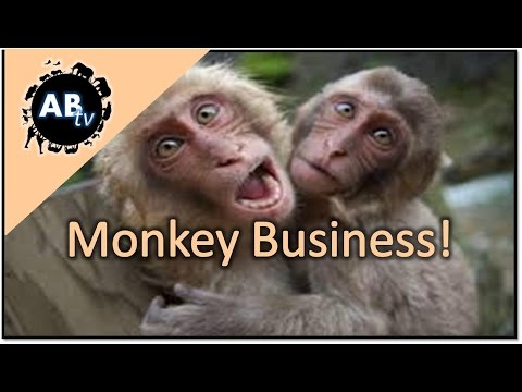 tim - Monkey business ; join Tim as he find the only wild population of monkeys in the state of Florida. Such cute animals, but certainly not a natural home in Florida. Enjoy! Subscribe now! https://ww...