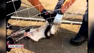 CrimeTube: Police Free Spooked Stray Cat Caught in Soccer Net - Crime Watch Daily