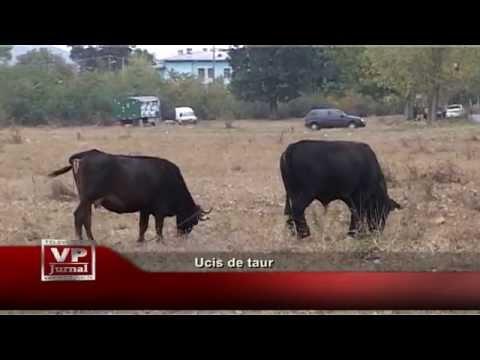 Ucis de taur