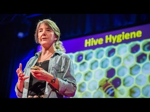 Marla Spivak%3A Why bees are disappearing
