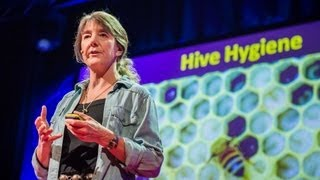 Download Youtube: Marla Spivak: Why bees are disappearing