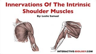 096 Innervations Of The Intrinsic Shoulder Muscles