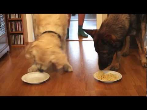 Spaghetti eating contest: golden retriever vs german shepherd.