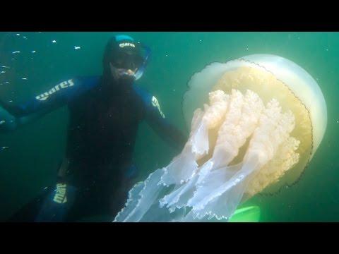 avvistamento di una medusa gigante: incredibile!