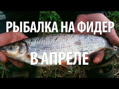 рыбалка на рыбца