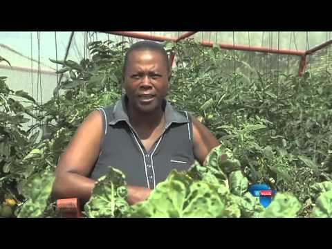 Groen vingers help gemeenskap / Success in the garden