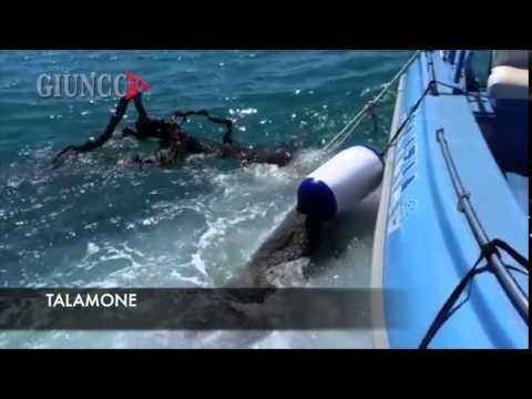 Polizia in azione in mare: recupera tronco record. Le immagini