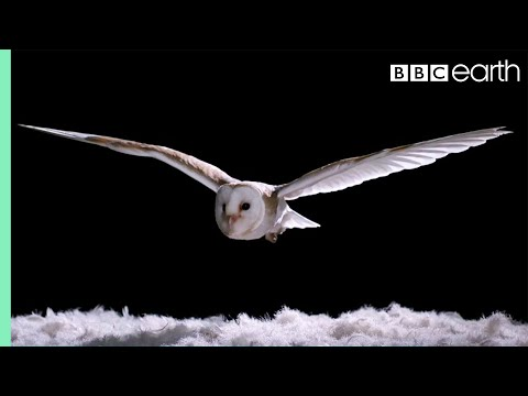 A Fascinating Experiment That Shows the Silent Grace of a Barn Owl in