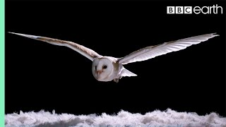 Download Youtube: Experiment! How Does An Owl Fly So Silently? - Super Powered Owls - BBC
