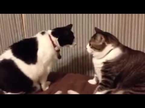"""due mici giocano a """"chi graffia prima?"""""""