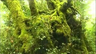 Video Destne pralesy tajemstvi zivota MP3, 3GP, MP4, WEBM, AVI, FLV Juni 2017
