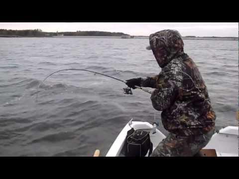 Duży szczupak 120cm PIKE FISH