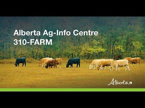 Winter feeding strategies for livestock