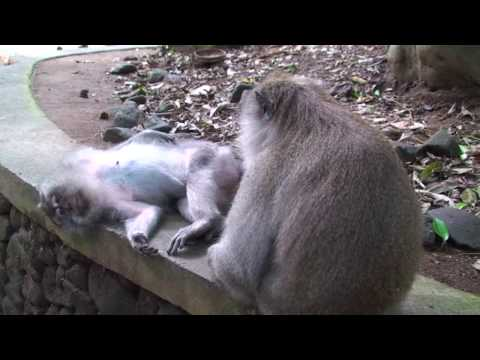 Video Monkey Foreplay download in MP3, 3GP, MP4, WEBM, AVI, FLV January 2017
