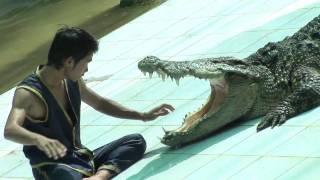 Crocodile Show At Namuang Safari Park Koh Samui Thailand