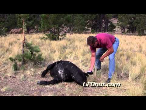 UFOnut.com -- Episode 011: Torres Cattle Mutilation