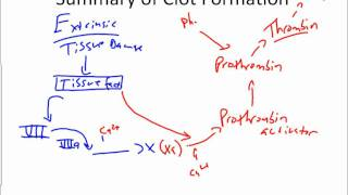 Platelets And Hemostasis.wmv