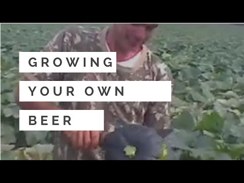 Grow your own beer in garden
