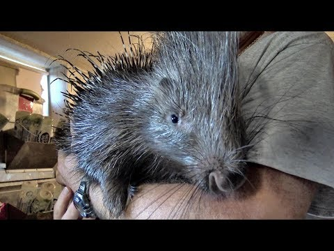 FISHING THE ROANOKE RIVER FOR STRIPE BASS...AND ...A PET PORCUPINE?? WHAT??
