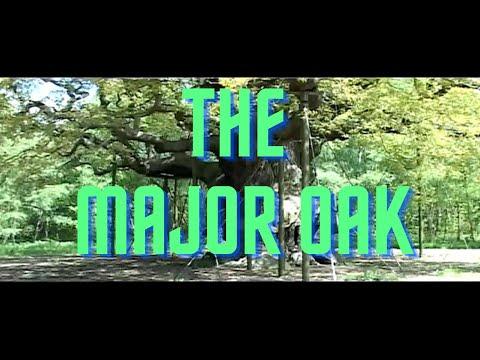 Educational videos for kids | The Major Oak | Learning for children | Sherwood Forest | History