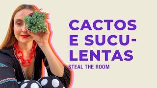 STEAL THE ROOM apresenta: como cuidar de cactos e suculentas em casa