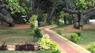 The most interesting place to see in Mahabubnagar is the famous banyan tree called Pillalamarri which is about 4 kms from the town. There is a tomb of a Musl...